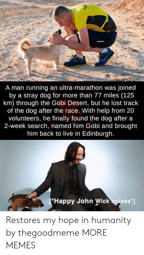 Finally Found: A man running an ultra-marathon was joined  by a stray dog for more than 77 miles (125  km) through the Gobi Desert, but he lost track  of the dog after the race. With help from 20  volunteers, he finally found the dog after a  2-week search, named him Gobi and brought  him back to live in Edinburgh.  Happy John Wick noises' Restores my hope in humanity by thegoodmeme MORE MEMES
