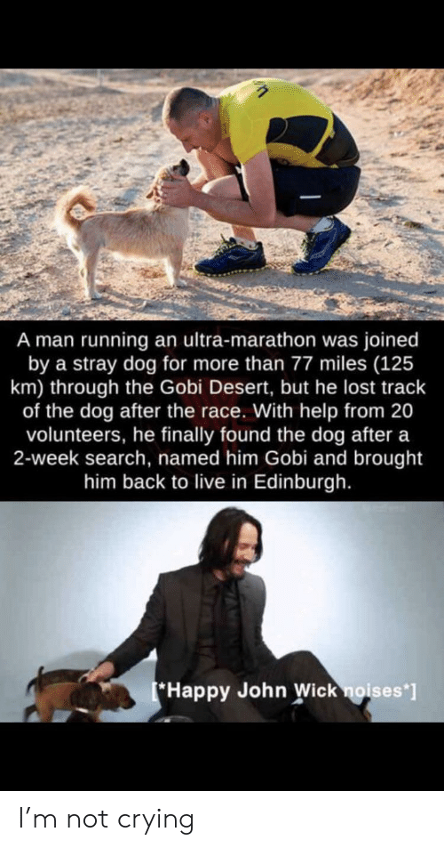 Finally Found: A man running an ultra-marathon was joined  by a stray dog for more than 77 miles (125  km) through the Gobi Desert, but he lost track  of the dog after the race. With help from 20  volunteers, he finally found the dog after a  2-week search, named him Gobi and brought  him back to live in Edinburgh.  Happy John Wick noises*] I'm not crying