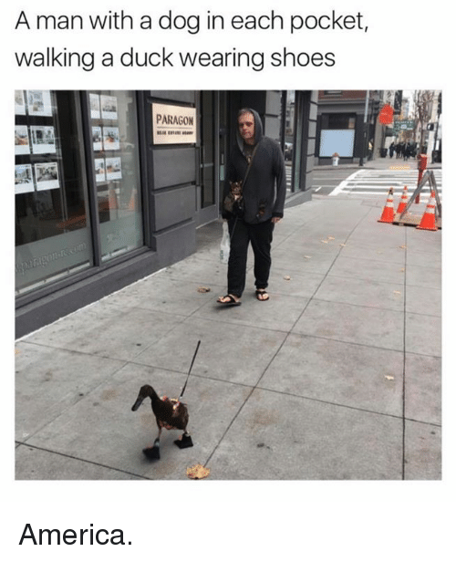 Memes, Ducks, and 🤖: A man with a dog in each pocket,  walking a duck wearing shoes  PARAGON America.
