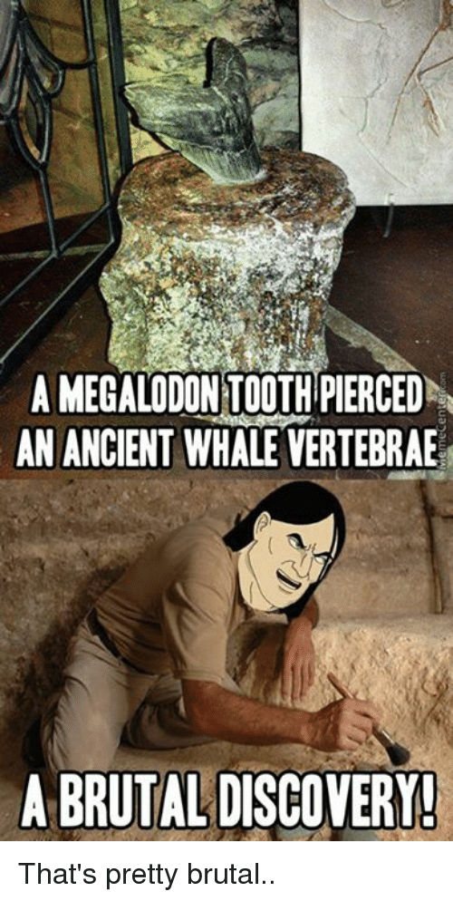 Pretty Brutal: A MEGALODONTOOTHPIERCED  AN ANCIENT WHALE VERTEBRAE  A BRUTAL DISCOVERY! That's pretty brutal..