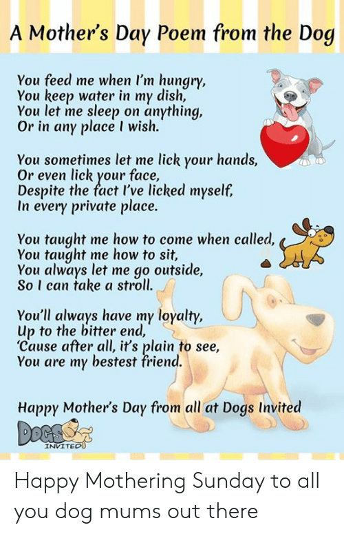 A Mothers Day Poem From The Dog You Feed Me When Im Hungry