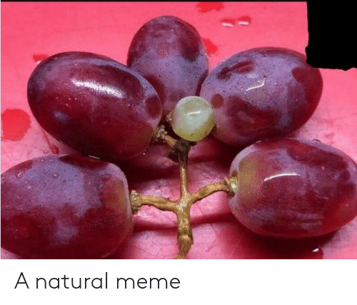 Meme, Natural, and A: A natural meme