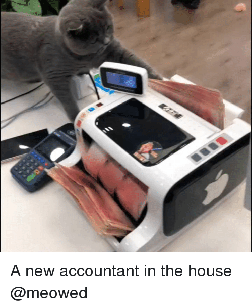 Memes, House, and 🤖: A new accountant in the house @meowed