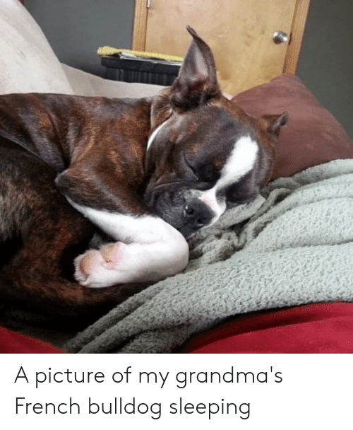 Bulldog, Sleeping, and French: A picture of my grandma's French bulldog sleeping