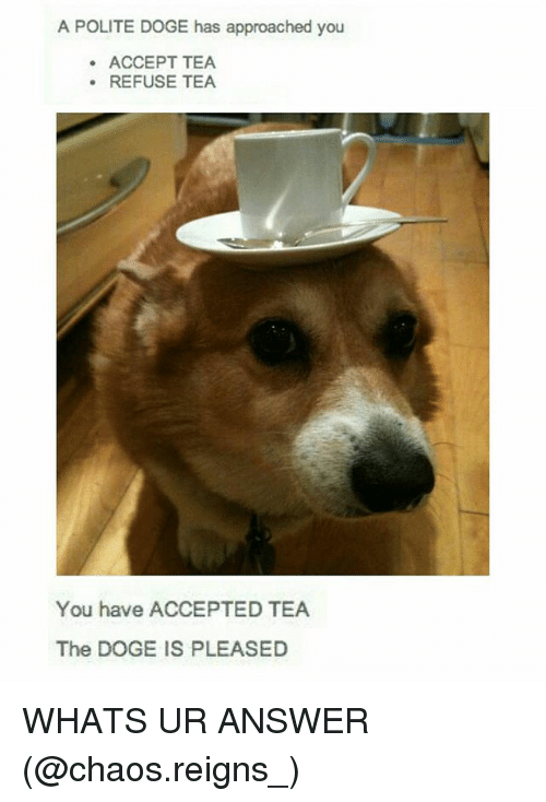 acception: A POLITE DOGE has approached you  ACCEPT TEA  .REFUSE TEA  You have ACCEPTED TEA  The DOGE IS PLEASED WHATS UR ANSWER (@chaos.reigns_)