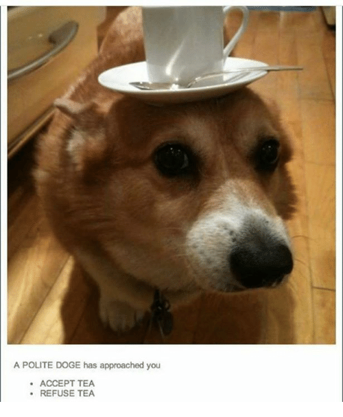 acception: A POLITE DOGE has approached you  ACCEPT TEA  REFUSE TEA