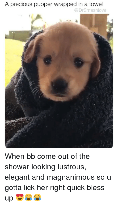 Bless Up, Memes, and Precious: A precious pupper wrapped in a towel  @DrSmashlove When bb come out of the shower looking lustrous, elegant and magnanimous so u gotta lick her right quick bless up 😍😂😂