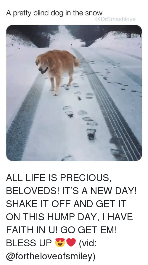 Shake It Off: A pretty blind dog in the snow  @DrSmashlove ALL LIFE IS PRECIOUS, BELOVEDS! IT'S A NEW DAY! SHAKE IT OFF AND GET IT ON THIS HUMP DAY, I HAVE FAITH IN U! GO GET EM! BLESS UP 😍❤️ (vid: @fortheloveofsmiley)
