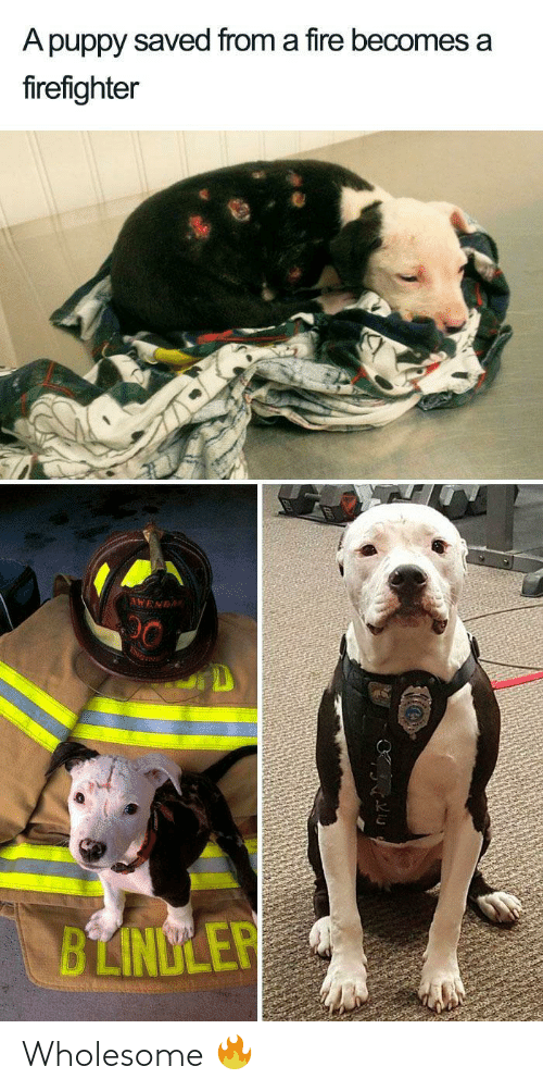 saved: A puppy saved from a fire becomes a  firefighter  AWENDA  BLINDLER Wholesome 🔥
