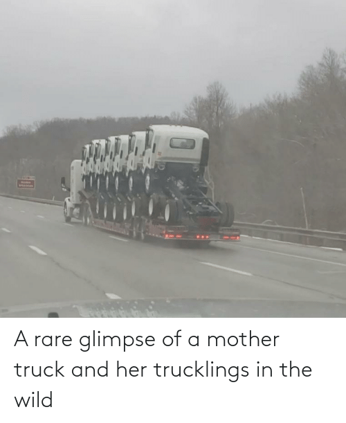 rare: A rare glimpse of a mother truck and her trucklings in the wild