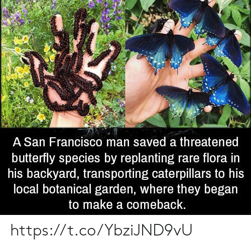 Butterfly, San Francisco, and Make A: A San Francisco man saved a threatened  butterfly species by replanting rare flora in  his backyard, transporting caterpillars to his  local botanical garden, where they began  to make a comeback. https://t.co/YbziJND9vU