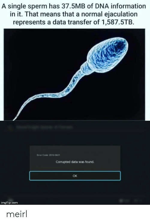 sperm: A single sperm has 37.5MB of DNA information  in it. That means that a normal ejaculation  represents a data transfer of 1,587.5TB  Error Code: 2016-0601  Corrupted data was found.  OK  imgflip.com meirl