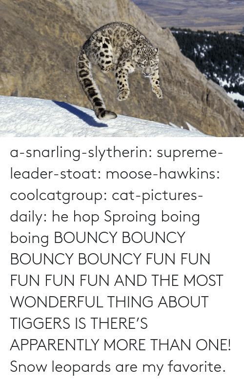 media: a-snarling-slytherin: supreme-leader-stoat:  moose-hawkins:  coolcatgroup:  cat-pictures-daily: he hop  Sproing boing boing    BOUNCY BOUNCY BOUNCY BOUNCY FUN FUN FUN FUN FUN  AND THE MOST WONDERFUL THING ABOUT TIGGERS IS THERE'S APPARENTLY MORE THAN ONE!   Snow leopards are my favorite.