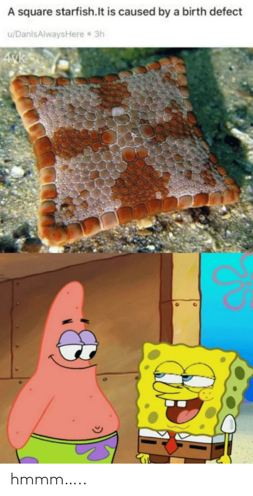 Square: A square starfish.lt is caused by a birth defect  u/DanlsAlwaysHere 3h  4yk hmmm…..