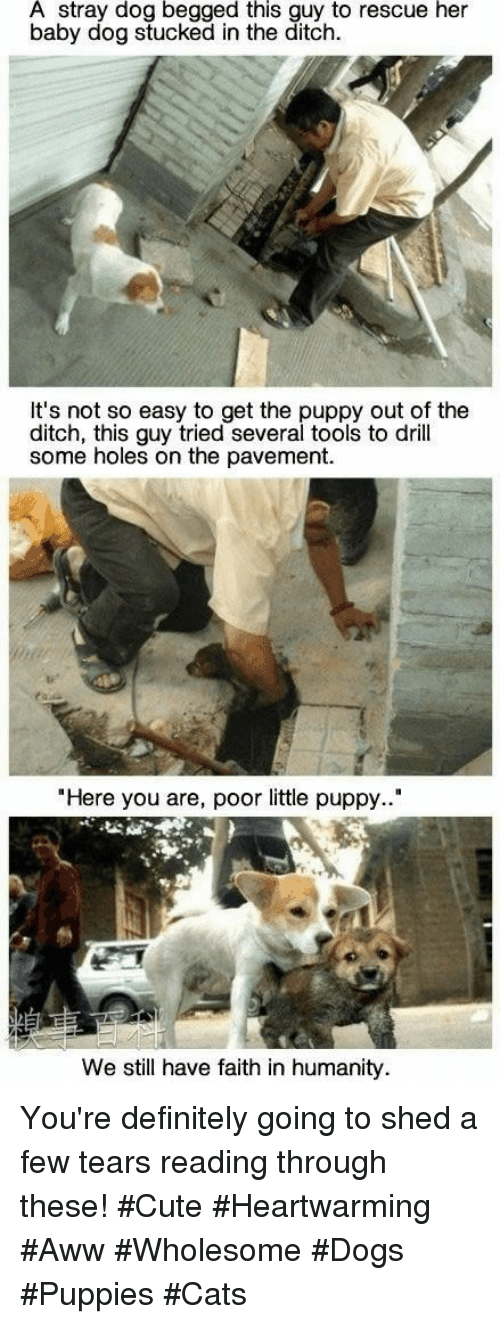 """Aww, Cats, and Cute: A stray dog begged this guy to rescue her  baby dog stucked in the ditch.  It's not so easy to get the puppy out of the  ditch, this guy tried several tools to drill  some holes on the pavement.  """"Here you are, poor little puppy..""""  We still have faith in humanity You're definitely going to shed a few tears reading through these! #Cute #Heartwarming #Aww #Wholesome #Dogs #Puppies #Cats"""