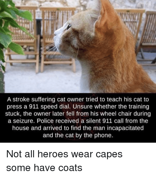 Phone, Police, and Heroes: A stroke suffering cat owner tried to teach his cat to  press a 911 speed dial. Unsure whether the training  stuck, the owner later fell from his wheel chair during  a seizure. Police received a silent 911 call from the  house and arrived to find the man incapacitated  and the cat by the phone. Not all heroes wear capes some have coats