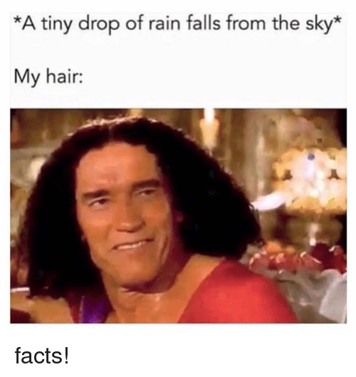 Facts, Memes, and Hair: *A tiny drop of rain falls from the sky*  My hair: facts!
