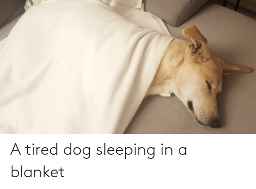 Sleeping, Dog, and Tired: A tired dog sleeping in a blanket