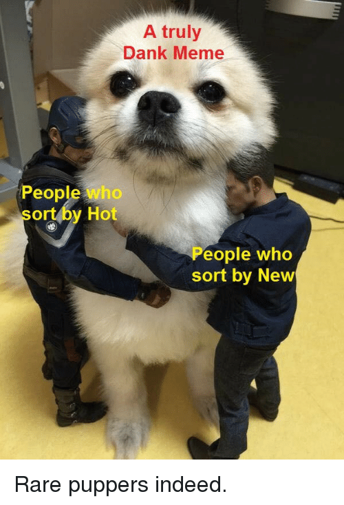 Dank Meme: A truly  Dank Meme  People who  sort by Hot  eople who  sort by New Rare puppers indeed.