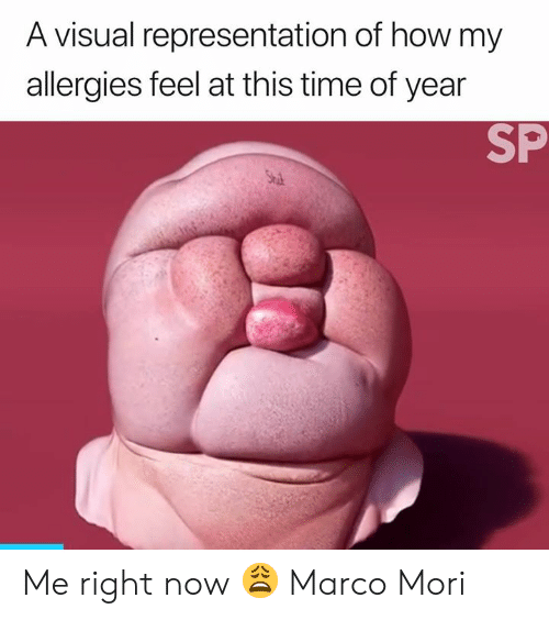 Me Right Now: A visual representation of how my  allergies feel at this time of year  SP  Stu Me right now 😩  Marco Mori