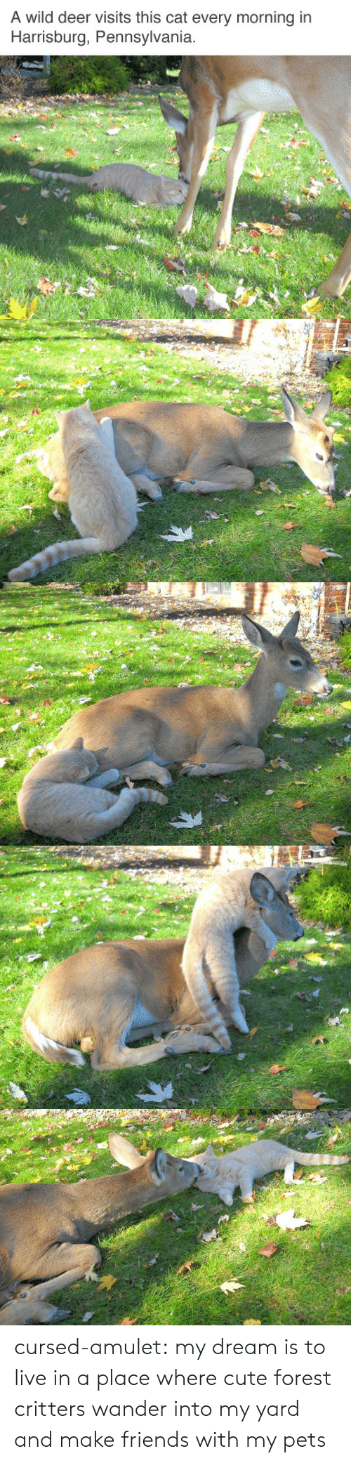 Make Friends: A wild deer visits this cat every morning in  Harrisburg, Pennsylvania cursed-amulet: my dream is to live in a place where cute forest critters wander into my yard and make friends with my pets
