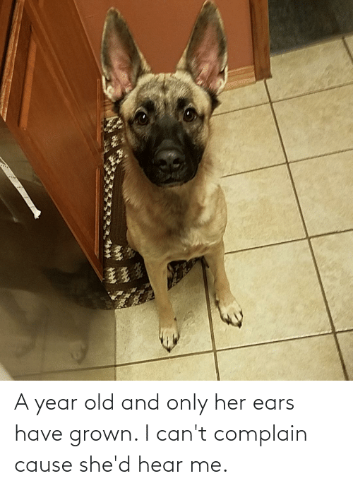 shed: A year old and only her ears have grown. I can't complain cause she'd hear me.