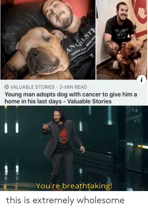 England: AA,  AB  ANGESTE  NORTH S  VALUABLE STORIES 2-MIN READ  Young man adopts dog with cancer to give him a  home in his last days - Valuable Stories  You're breathtaking!  ENGLAND this is extremely wholesome