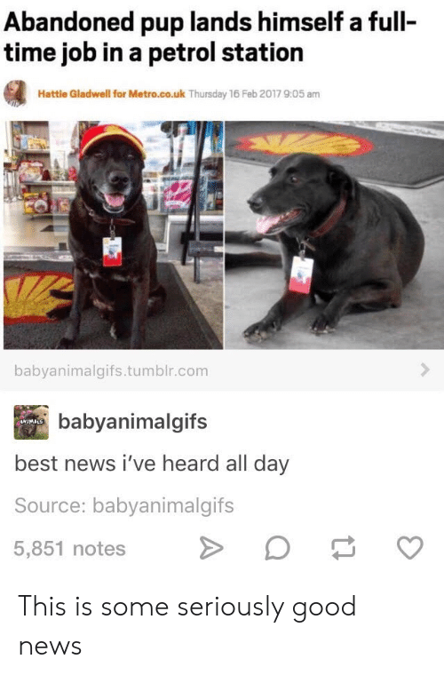 Feb 2017: Abandoned pup lands himself a full  time job in a petrol station  Hattle Gladwell for Metro.co.uk Thursday 16 Feb 2017 9:05 am  babyanimalgifs.tumblr.com  babyanimalgifs  4WIMALS  best news i've heard all day  Source: babyanimalgifs  5,851 notes This is some seriously good news