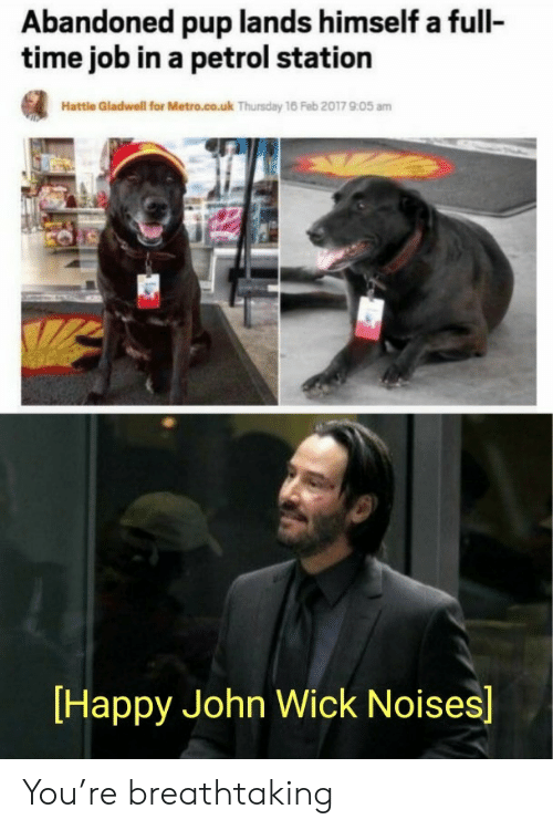 Feb 2017: Abandoned pup lands himself a full-  time job in a petrol station  Hattle Gladwell for Metro.co.uk Thursday 16 Feb 2017 905 am  Happy John Wick Noises] You're breathtaking