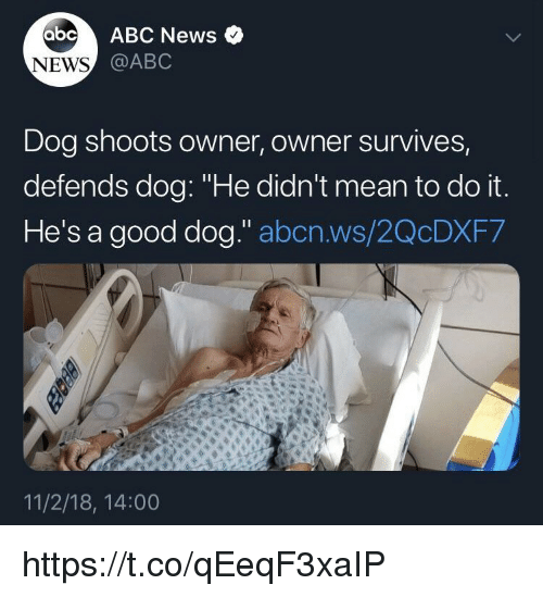 """Abc, Memes, and News: abc ABC News  NEWS  @ABC  Dog shoots owner, owner survives,  defends dog: """"He didn't mean to do it  He's a good dog."""" abcn.ws/2QcDXF7  11/2/18, 14:00 https://t.co/qEeqF3xaIP"""