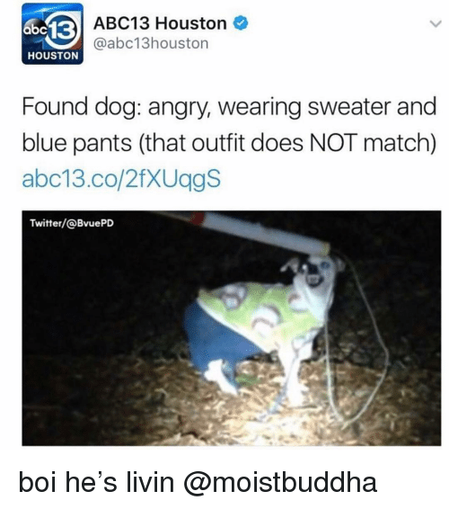 Memes, Twitter, and Abc13: abc13  ABC13 Houston  @abc13houston  HOUSTON  Found dog: angry, wearing sweater and  blue pants (that outfit does NOT match)  abc13.co/2fXUggS  Twitter/@BvuePD boi he's livin @moistbuddha