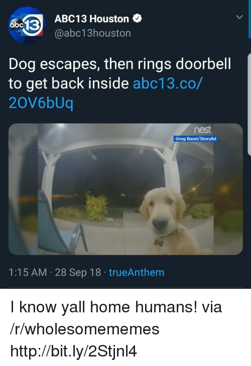 Abc13, Home, and Houston: ABC13 Houston  @abc13houston  abc13  Dog escapes, then rings doorbell  to get back inside abc13.co/  20V6bUq  nest  Greg BaselV/Storyful  1:15 AM 28 Sep 18 trueAnthem I know yall home humans! via /r/wholesomememes http://bit.ly/2Stjnl4