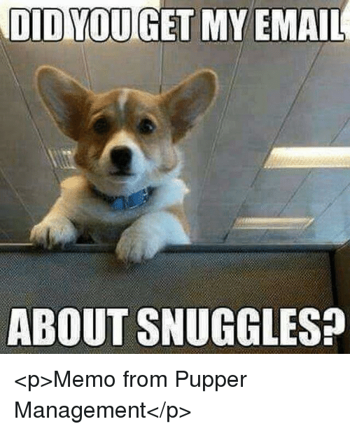 Management, Memo, and Snuggles: ABOUT SNUGGLES? <p>Memo from Pupper Management</p>