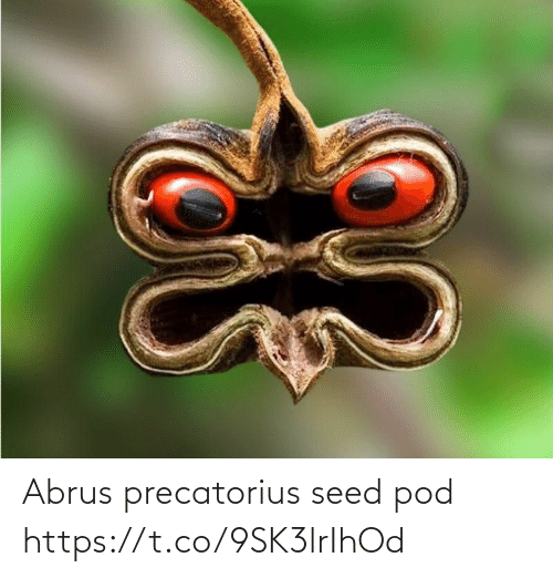 Faces-in-Things: Abrus precatorius seed pod https://t.co/9SK3lrIhOd