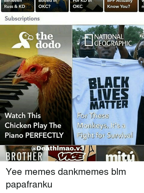 Subscripter: Actually  Know You?  Russ & KD  OKC?  OKC  Subscriptions  the  NATIONAL  dodo L GEOGRAPHIC  BLACK  LIVES  MATTER  Watch This  For These  Chicken Play The  Monkeys, lts a  Piano PERFECTLY  Fight for Survival  Deathlmao.v3  ROTHER Yee memes dankmemes blm papafranku