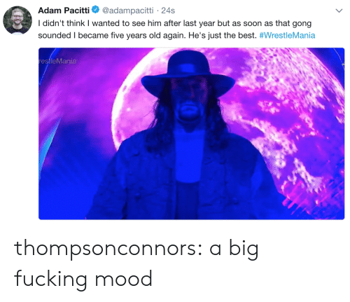gong: Adam Pacitti  @adampacitti 24s  I didn't think I wanted to see him after last year but as soon as that gong  sounded I became five years old again. He's just the best. #WrestleMania  restleMania thompsonconnors:  a big fucking mood