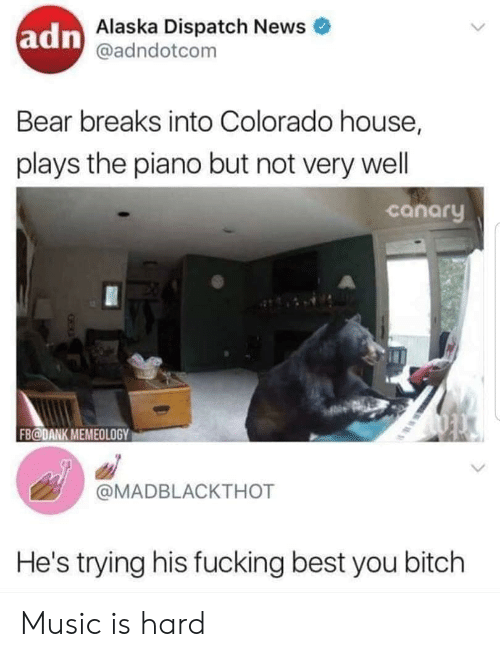 Bitch, Dank, and Fucking: adn Alaska Dispatch News  @adndotcom  Bear breaks into Colorado house,  plays the piano but not very well  canary  FB@DANK MEMEOLOGY  @MADBLACKTHOT  He's trying his fucking best you bitch Music is hard