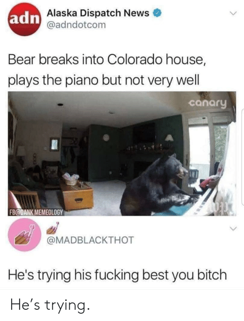 Bitch, Dank, and Fucking: adn Alaska Dispatch News  @adndotcom  Bear breaks into Colorado house,  plays the piano but not very well  canary  FB@DANK MEMEOLOGY  @MADBLACKTHOT  He's trying his fucking best you bitch He's trying.