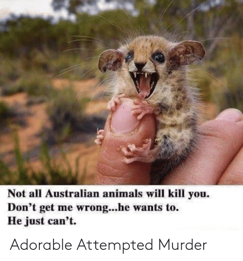 Adorable: Adorable Attempted Murder