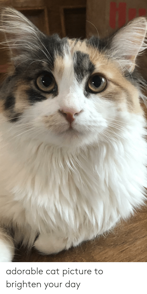Adorable, Cat, and Day: adorable cat picture to brighten your day