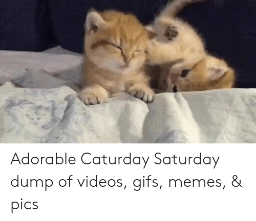 Gifs: Adorable Caturday Saturday dump of videos, gifs, memes, & pics