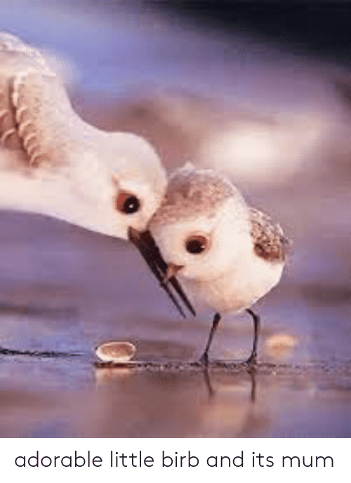 Adorable,  Birb, and Little: adorable little birb and its mum