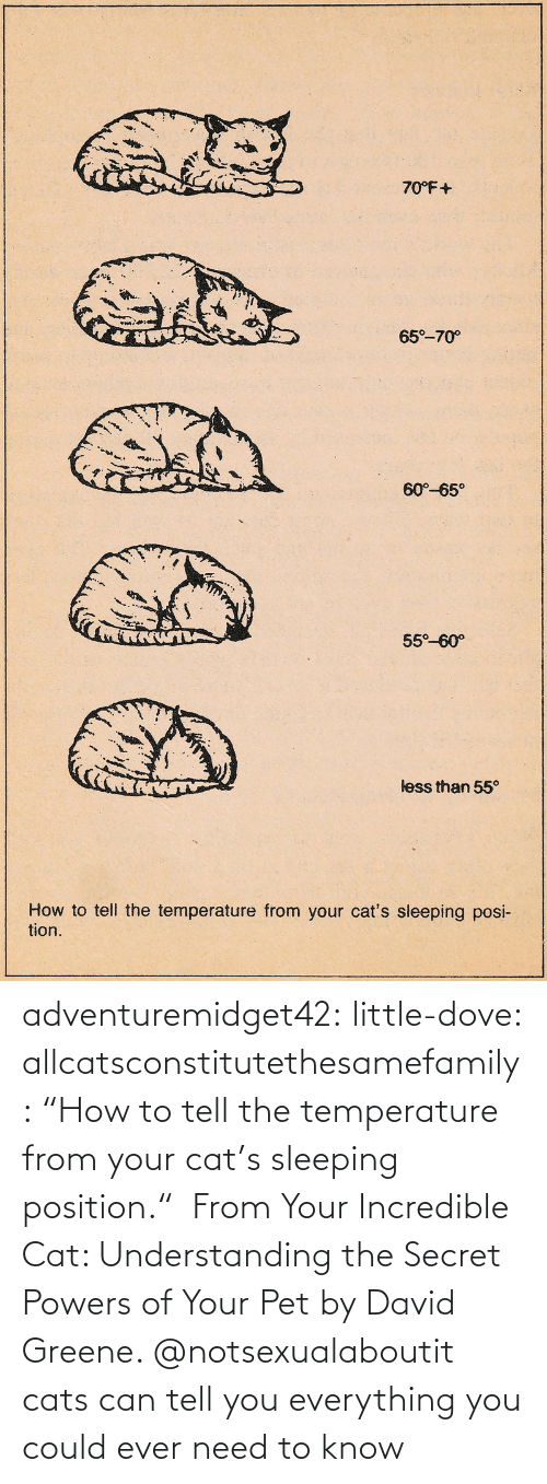 "amazon.com: adventuremidget42:  little-dove:  allcatsconstitutethesamefamily: ""How to tell the temperature from your cat's sleeping position.""  From Your Incredible Cat: Understanding the Secret Powers of Your Pet by David Greene.    @notsexualaboutit   cats can tell you everything you could ever need to know"