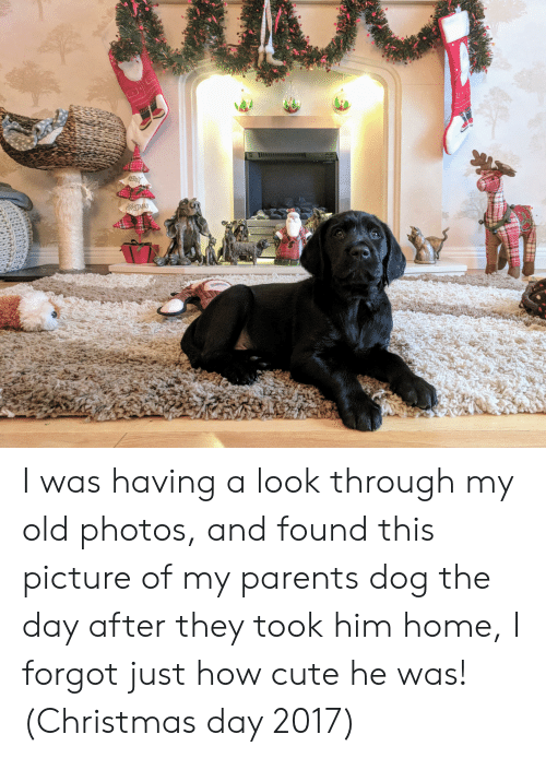 Christmas, Cute, and Parents: AERRY  ARSTMAS I was having a look through my old photos, and found this picture of my parents dog the day after they took him home, I forgot just how cute he was! (Christmas day 2017)