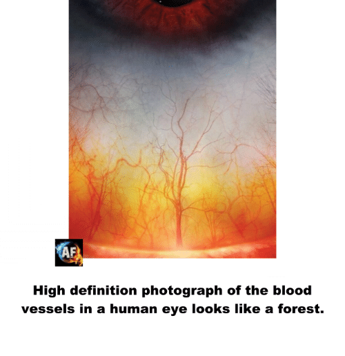 Definitally: AF  High definition photograph of the blood  vessels in a human eye looks like a forest.