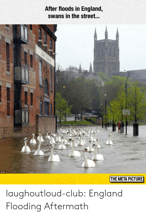swans: After floods in England,  swans in the street...  THE META PICTURE laughoutloud-club:  England Flooding Aftermath