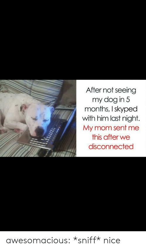 Tumblr, Blog, and Mom: After not seeing  my dog in 5  months, I skyped  with him last night.  My mom sent me  this after we  disconnected awesomacious:  *sniff* nice