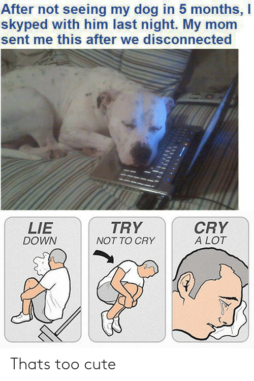 too cute: After not seeing my dog in 5 months, I  skyped with him last night. My mom  sent me this after we disconnected  TRY  CRY  A LOT  LIE  DOWN  NOT TO CRY Thats too cute