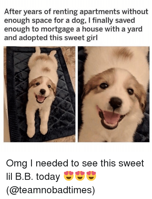 Lil B: After years of renting apartments without  enough space for a dog, I finally saved  enough to mortgage a house with a yard  and adopted this sweet girl Omg I needed to see this sweet lil B.B. today 😍😍😍(@teamnobadtimes)