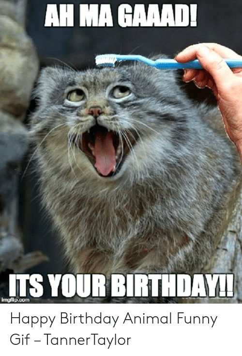 Happy Birthday Images Funny Animals Funny Png